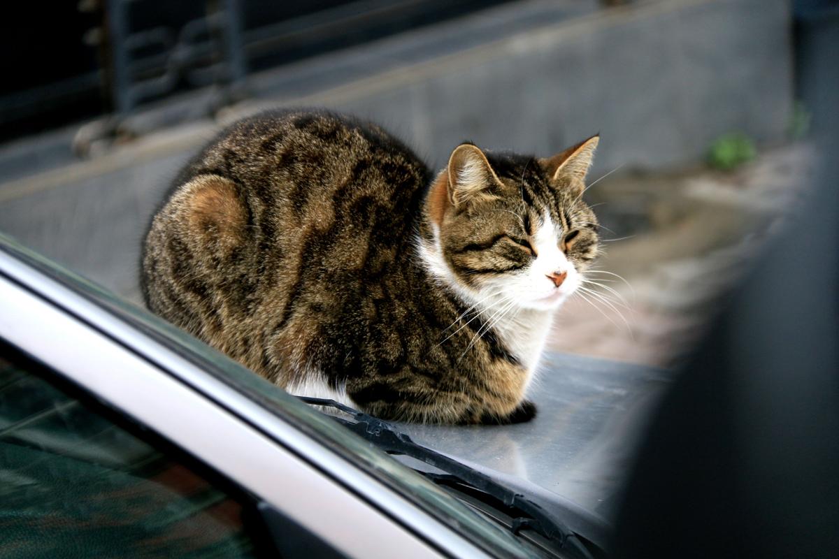 伊斯坦堡街頭的貓 - 小檔