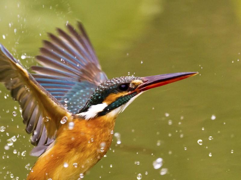 大自然中飛翔的珠寶